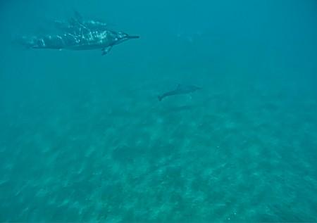 Snorkeling still (GoPro) - Dolphins