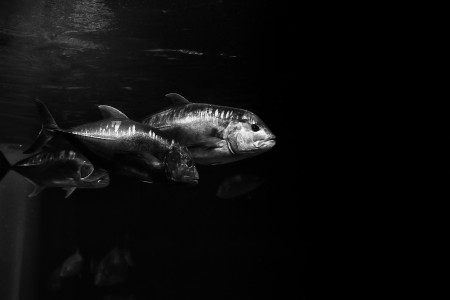 Hawaii 2013 - Unknown Fish 1