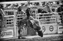Stampede 2012 - Bull Rider 1 - BW