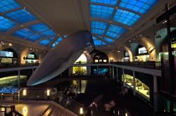 NYC - Aquarium 1